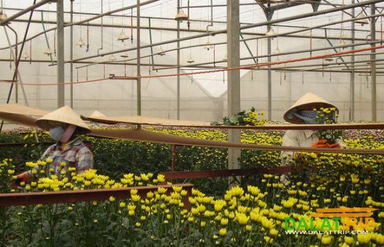 Ha Dong Flower Village Dalat