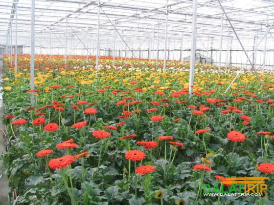 Dalat flower villages doing tourism