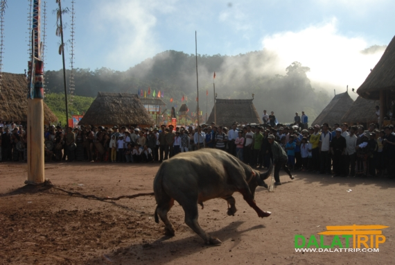 Program of National Tourism Year 2014 Central Highland – Dalat, Lam Dong province