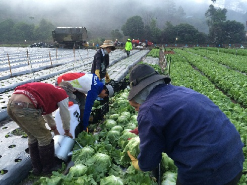"""Miracle Vegetable Village"" of Japan in Dalat city"