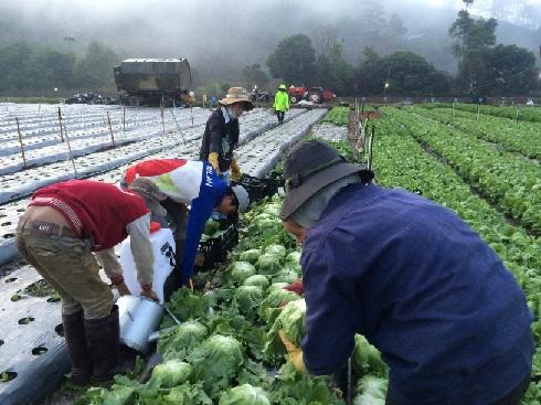 An Phu Lacue farm