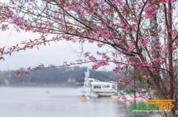 Types of flowers that embellish Da Lat