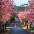 a street with cherry blossoms