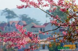 The Symphony of Dalat Spring