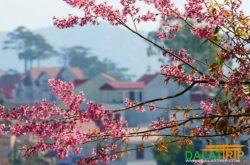 The Symphony of Dalat Spring