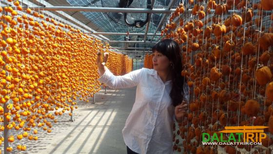 dried persimmon technology in Dalat