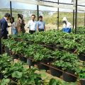 visiting straberry plants