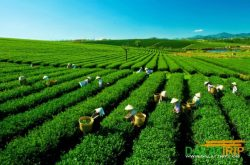 Da Lat – Developing sustainable tourism associated with on-the-spot export