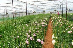 Lam Dong is the largest vegetable & flower cultivation area in Vietnam