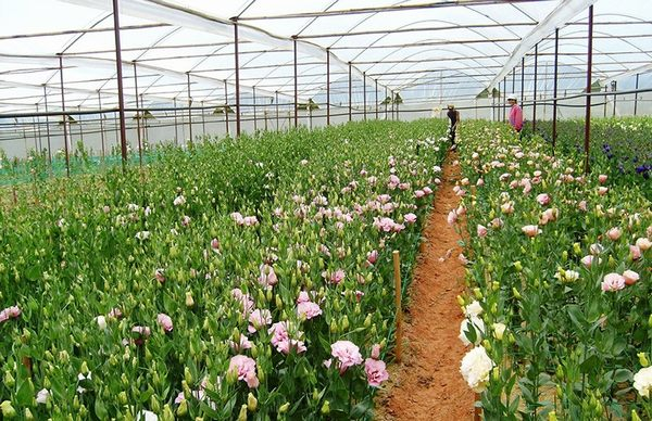 Lam Dong is the largest vegetable & flower cultivation