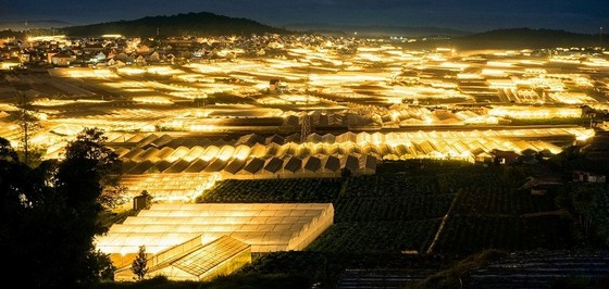 Dalat sparkles with the light of the greenhouses