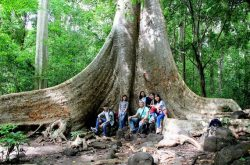 a big tree in Cat Tien National park