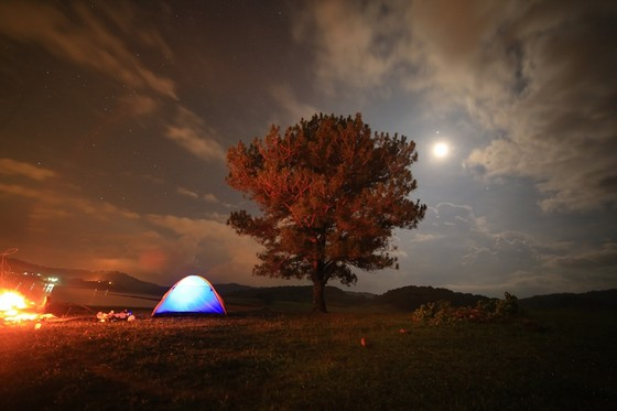 Camping in Golden Stream, lonely pine tree