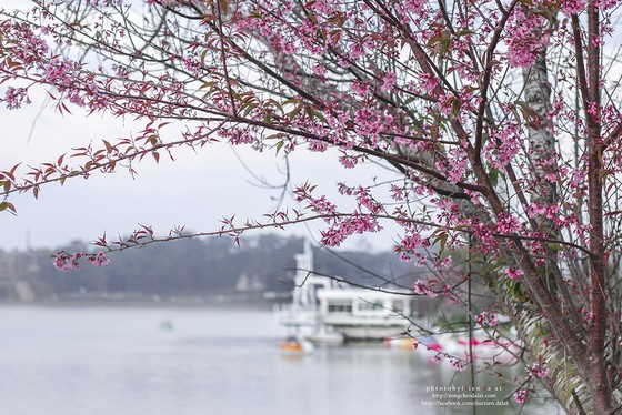 Travelling to Dalat in spring with many flowers blooming